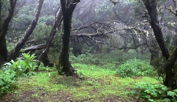 tropical-forest-La-Gomera_s.jpg