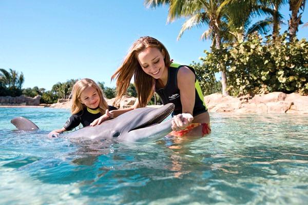dolphin1_s.jpg