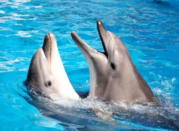 dolphin3_s.jpg
